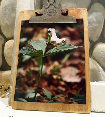 creative picture frames - clipboard photo holder