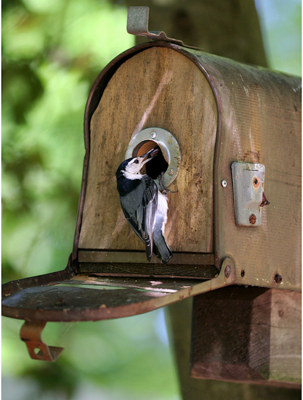 Ten favorite diy birdhouse ideas rustic crafts chic for What to do with old mailbox