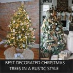 best-christmas-trees