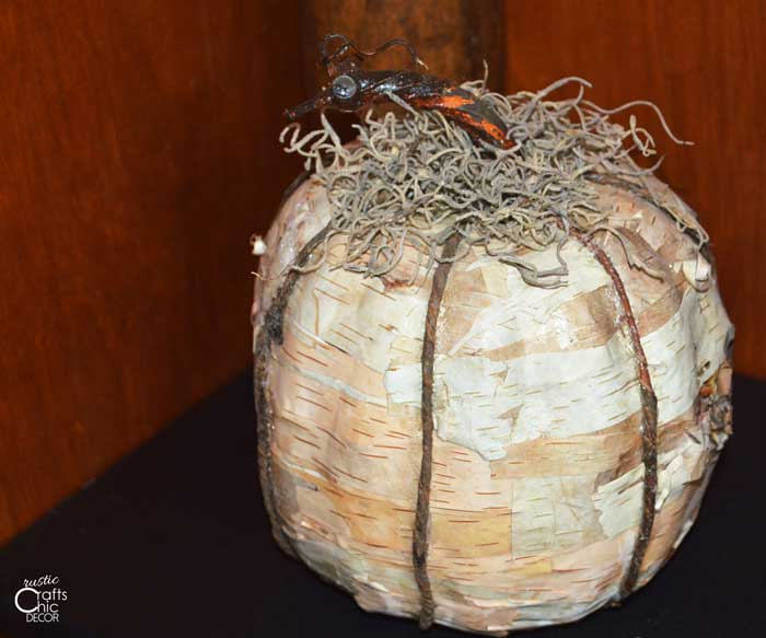 birch covered pumpki