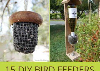 diy bird feeders