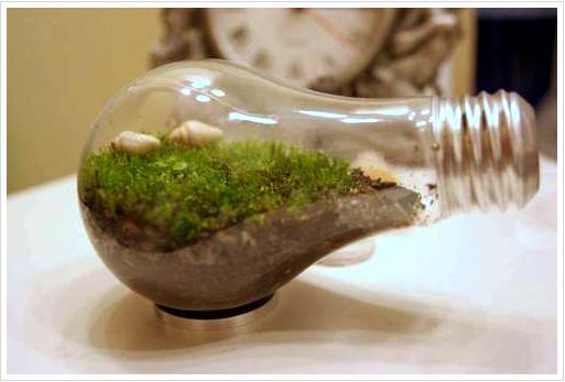 light-bulb-terrarium