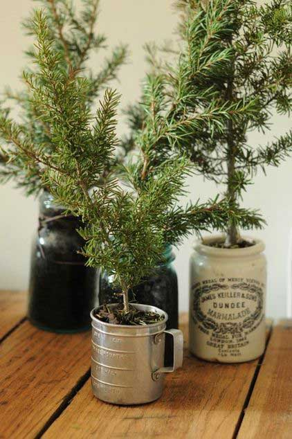 potted tree cuttings in vintage containers