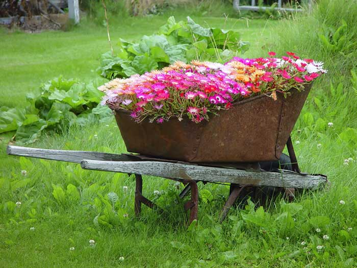 rustic garden ideas - wheelbarrow planter
