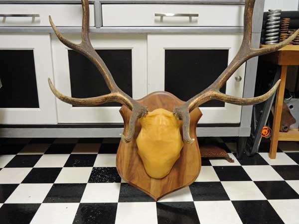 elk antlers before picture