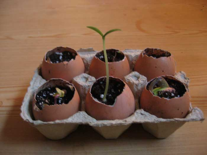 earth day seed starters