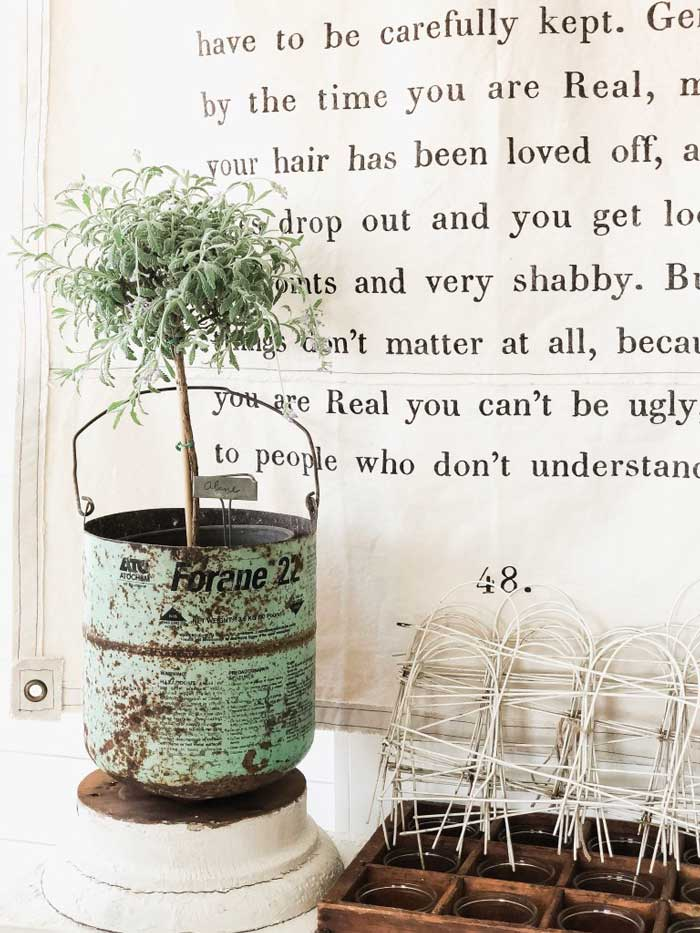 old can planter