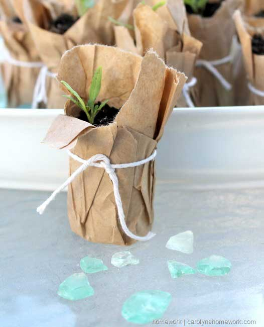 toilet paper roll seedling pots