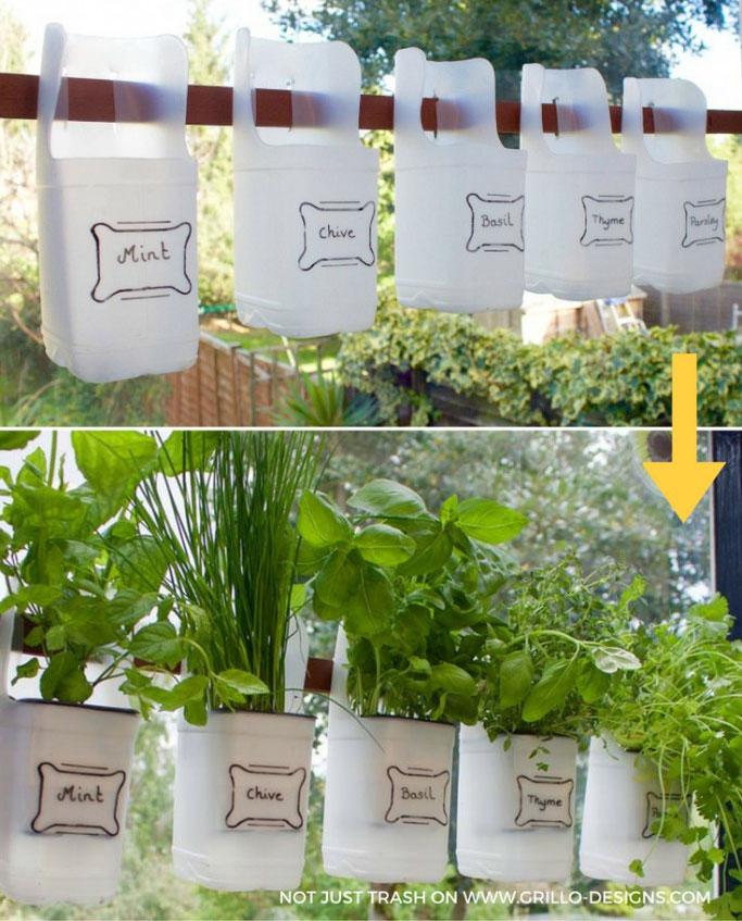 milk jug herb garden