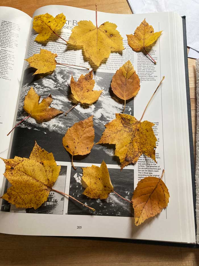 fall leaves pressed in a book