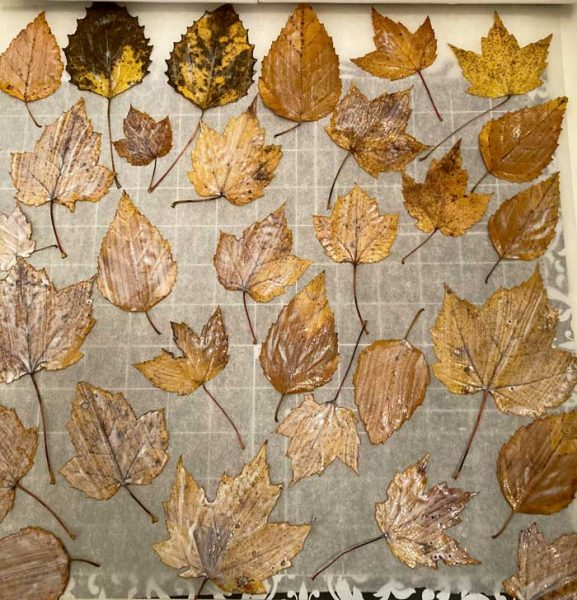 leaves drying