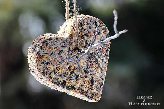heart shaped diy suet cakes